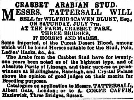 General Grant Crabbet Arabian stallion