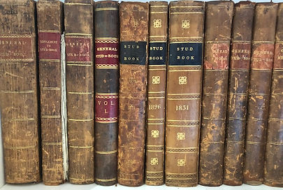 Books 2.jpeg