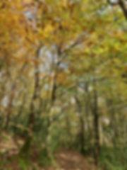 Winter walk in Kilminorth woods.jpg