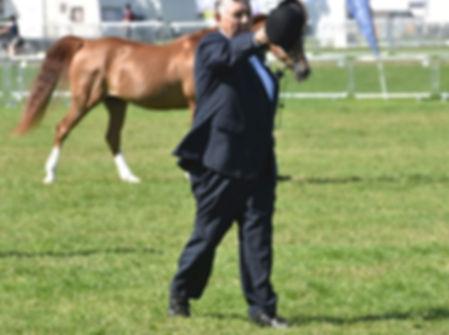 General Grant Crabbet Arabian stallion