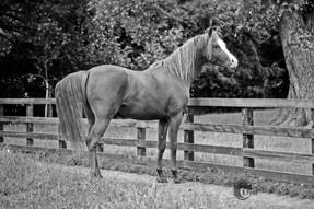 Aurelian 1981