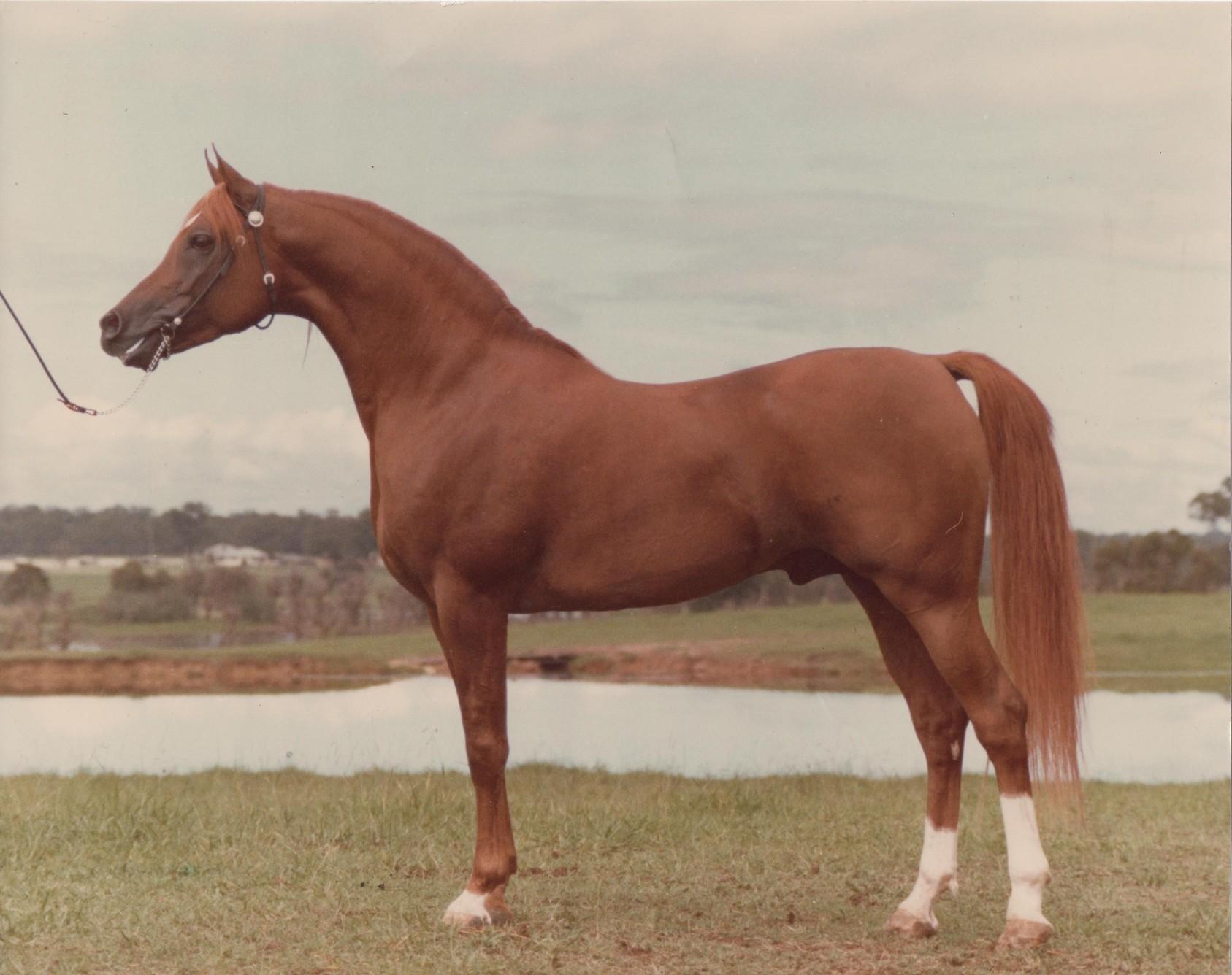 Ralvon Pilgrim Prestonville 1978 - web