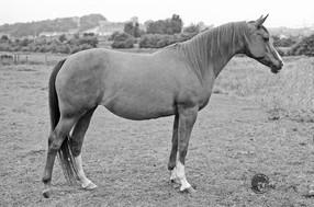 Jonquil 1972