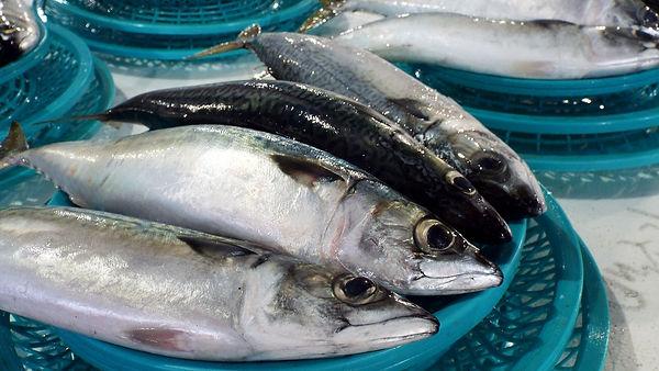 fish-2488269_1920_edited.jpg