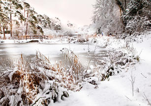 The Ponds in Winter