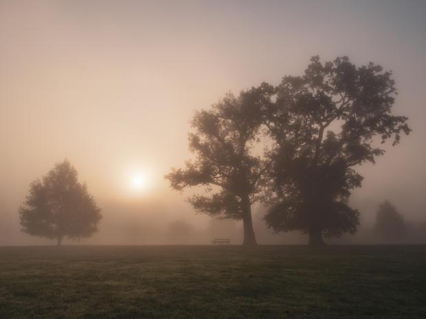Sun Rise Through the Mist, Rothamsted Park