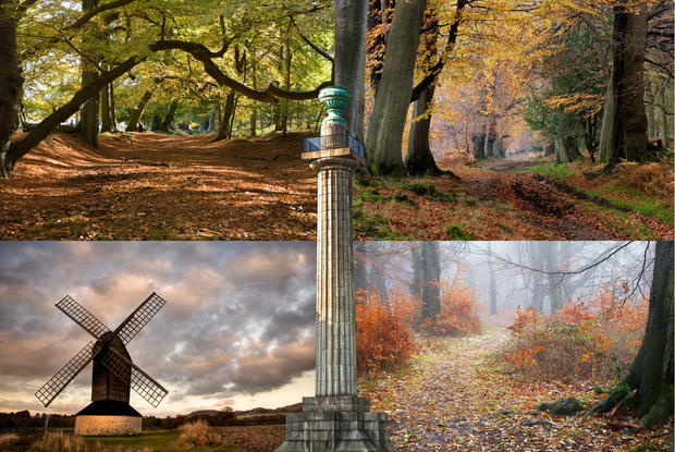 Autumn in Ashridge Collage