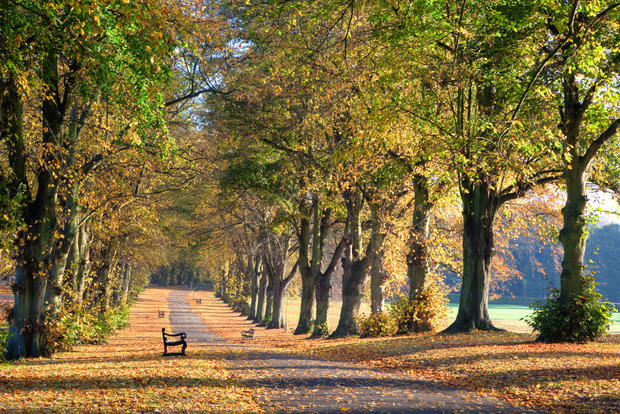 Avenue of Trees, Rothamsted Park