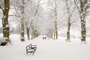 Enjoying the Snow in Rothamsted Park
