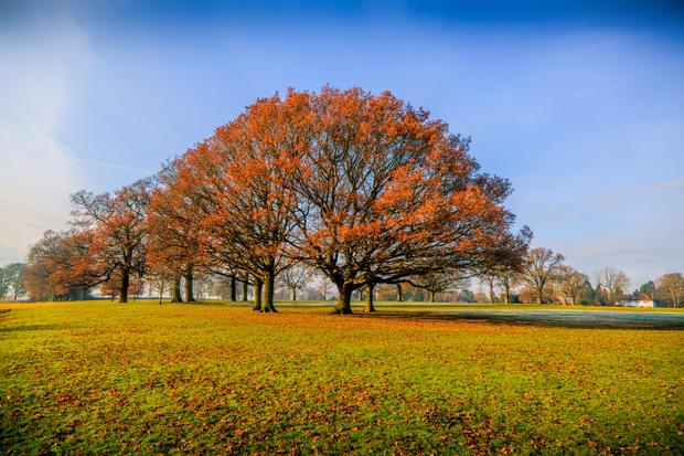 Autumn Trees, Rothamsted Park.jpg