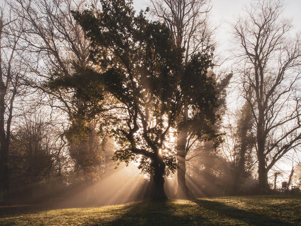 Sun Beams Through the Avenue of Trees, Rothamsted Park