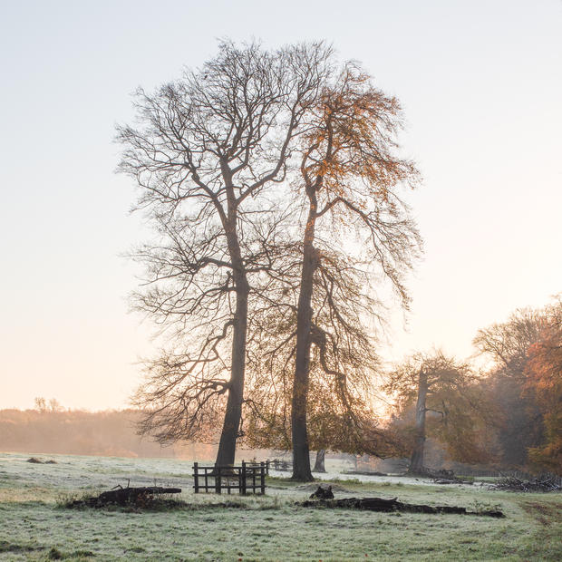 Early Morning Frost, Ashridge