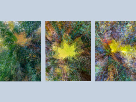 Autumn Multiple Exposures