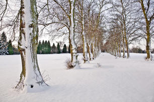 Rothamsted Park Avenue in Winter