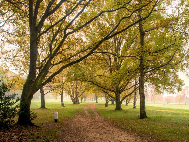 Bridal Path Through Harpenden Common