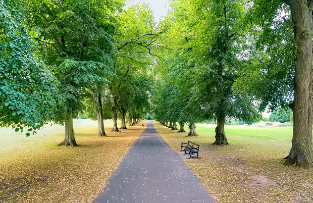Avenue of Trees in Summer, Rothamsted