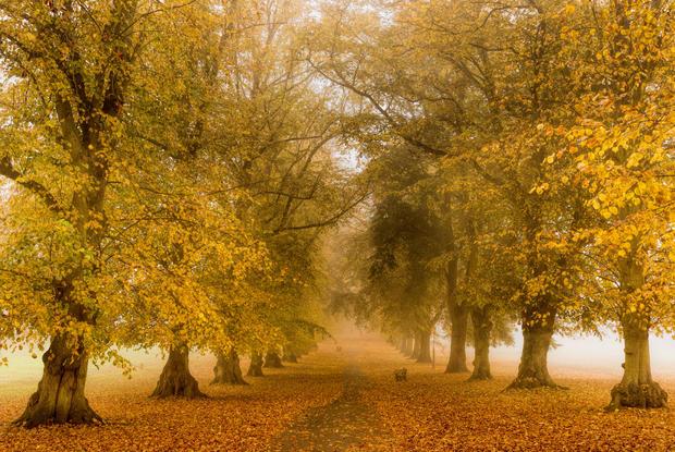 Avenue of Trees 2, Rothamsted Park.j