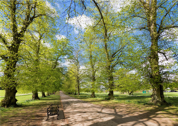 Avenue of Trees in Spring, Rothamsted
