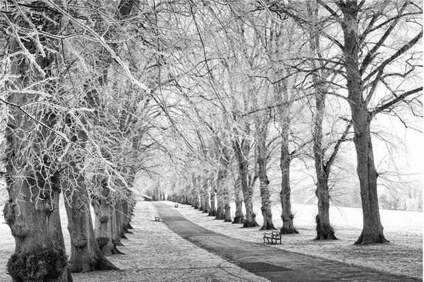 Avenue of Trees in Winter, Rothamsted