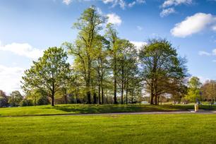Baa-Lamb Trees, Harpenden Common
