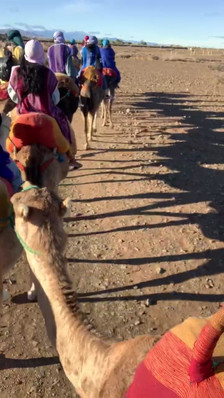 """Walking with camels"" by Hans"