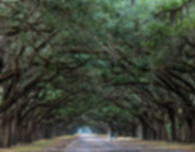 Advanced-A Quiet Walk-Stan Lituchy.jpg