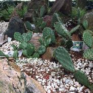 April 2020 - Etablering af kaktusbed