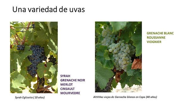 varieties of vines of domain of eglisette