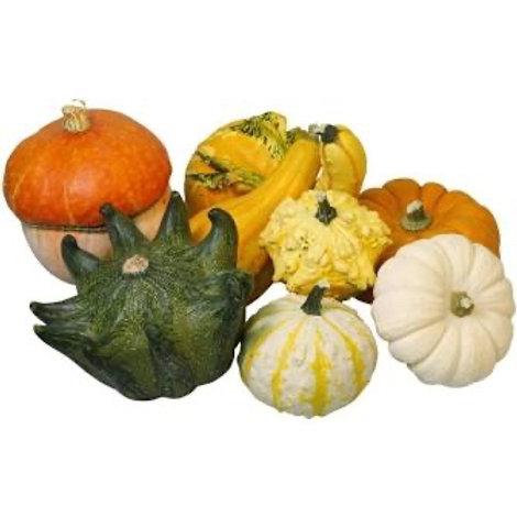 Decorative Gourds - Small