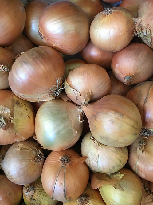 Onions - cooking x 1