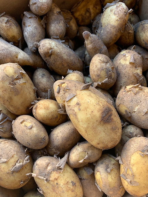 Potatoes - Cornish New   500g