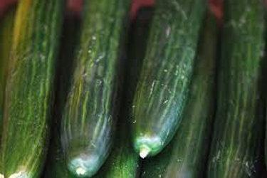 Cucumber - Whole