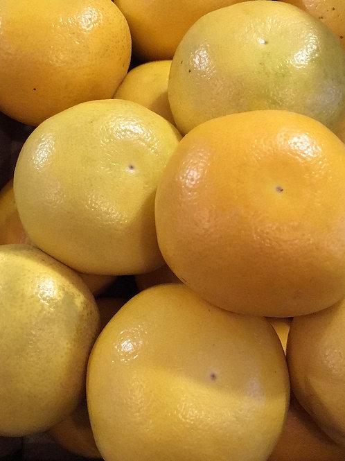 Grapefruit  - Marsh