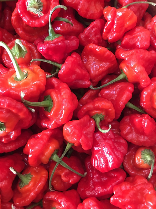 Scotch bonnet chillies x2