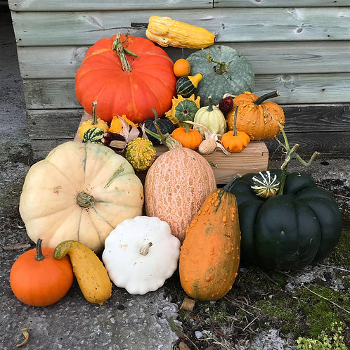 Decorative Gourds - Large