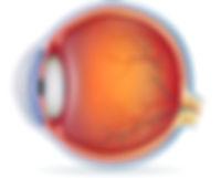 eyeanatomy.jpg