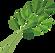 kisspng-parsley-coriander-leaf-celery-ic