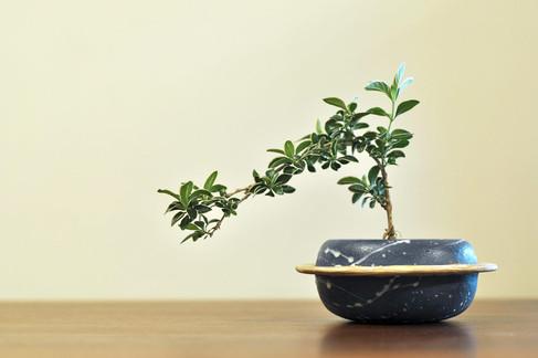 WT.ceramics: Planet Pot with plant