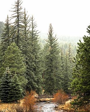 Colorado Evergreen Bear Creek 4-22-19 WE
