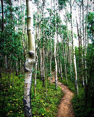 Colorado Mt. Elbert-68.jpg