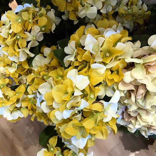 yellow hydrangea.jpg