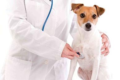 ветеринарный кардиолог