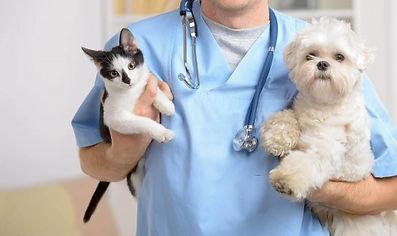 Ветеринарный терапевт для кошки
