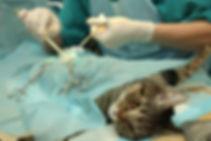 Хирург для кошек