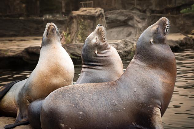 """Im Zoo """"Zoom"""" Gelsenkirchen"""