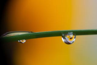Macro mit Sonnenblumen