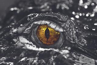 Das Auge von Mordor??