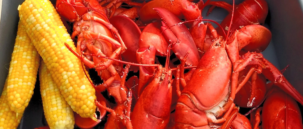 *Live Maine Lobster* 1.0 - 1.25 lbs. each (Ligonier Country Market Pick-up) $14