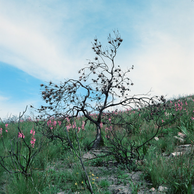 A blooming landscape