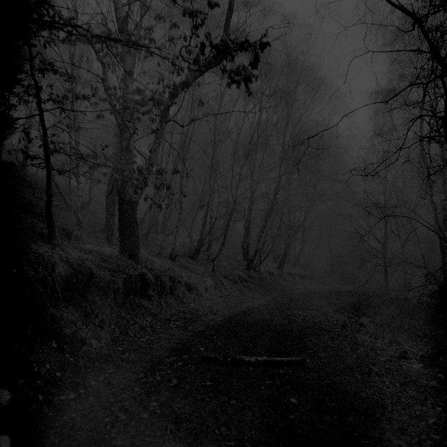 Cannock Chase Fog 6.jpg